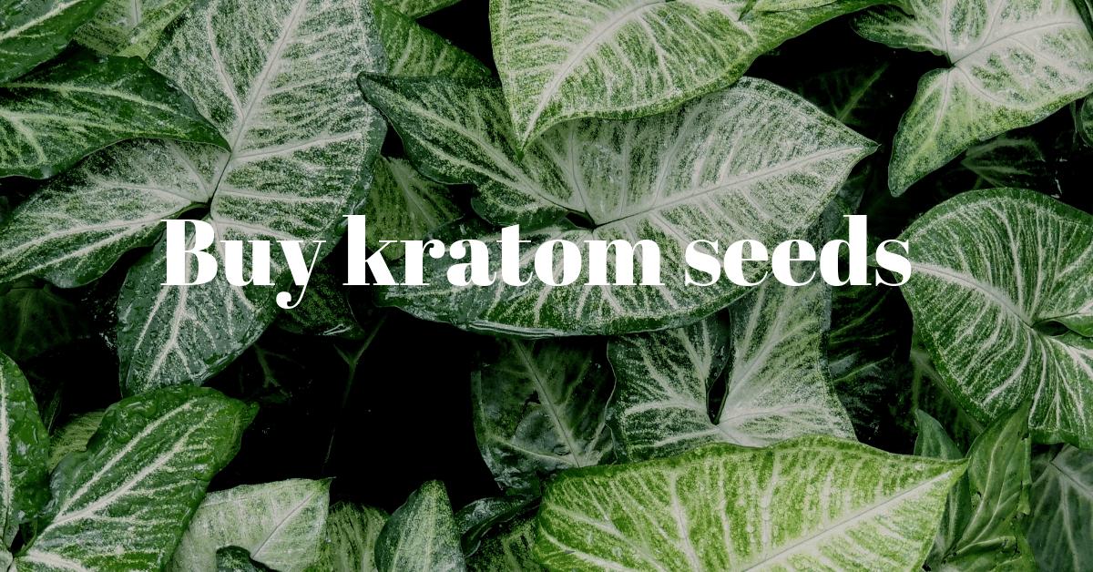 Buy kratom seeds
