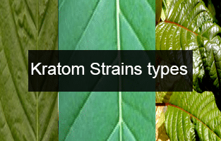 kratom-strains-effects-dosage