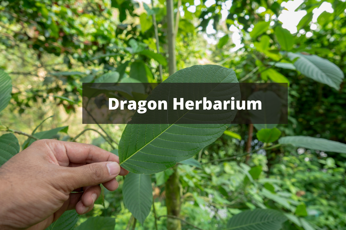Dragon Herbarium
